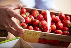 Obst- und Gemüseverpackungen
